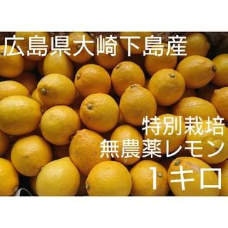 アロエ様専用 無農薬!広島県大崎下島産 特別栽培レモン 1キロ(フルーツ)