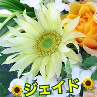 花種子 ヒマワリ ✳️ジェイド 10粒(その他)
