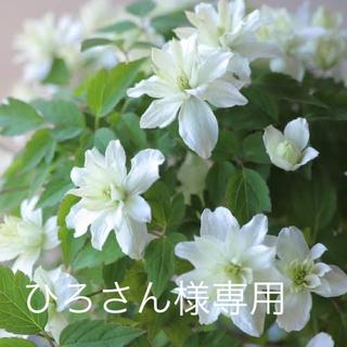 エヌジーティーフォーティーエイト(NGT48)のNGT48中井りかセット(アイドルグッズ)