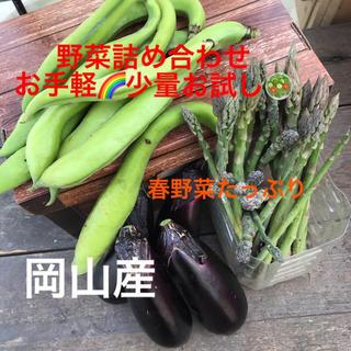 家飲み春野菜セット🥗少量お試し😋宅急便コンパクトサイズ(野菜)