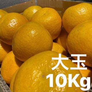 大玉 宇和ゴールド 10Kg  美生柑 河内晩柑 愛媛 (フルーツ)