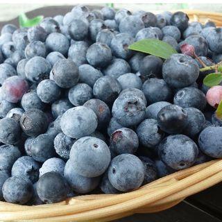 ブルーベリー(栽培期間中農薬不使用)たっぷり1キロ(フルーツ)