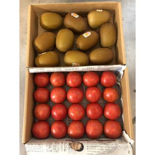 高糖度フルーツトマト&ゴールドキウイ10個(フルーツ)