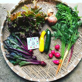 【冷蔵便】渥美半島から直送!旬彩り野菜バスケット(野菜)