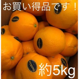 Sankistネーブルオレンジ 約5kg(フルーツ)