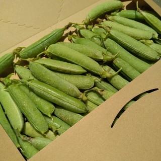 採れたて グリーンピース 鹿児島産 無農薬 無化学肥料(野菜)