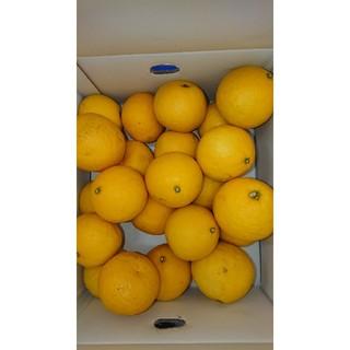 温室 小夏 2Lサイズ 5kg 高知県土佐市産 ご家庭用(フルーツ)