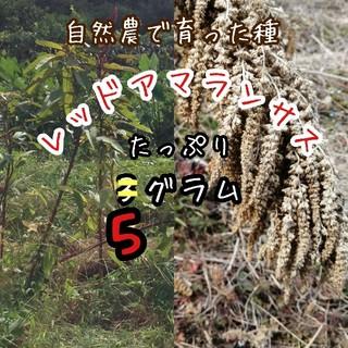 【令和元年収穫・自然農・高発芽率】赤アマランサスの種 たっぷり5g(野菜)