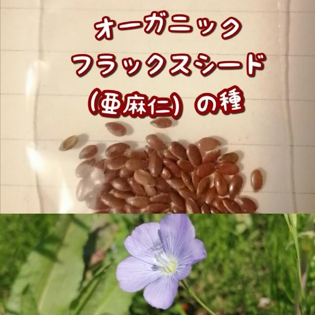 【家庭菜園に水色のお花を】亜麻仁の種 おまけつき 食品/飲料/酒の食品(野菜)の商品写真
