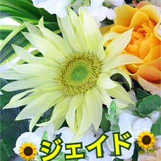 ヒマワリ ✳️ジェイド  10粒(その他)