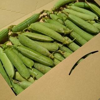 採れたて グリーンピース 鞘付き 鹿児島産 無農薬 無化学肥料(野菜)