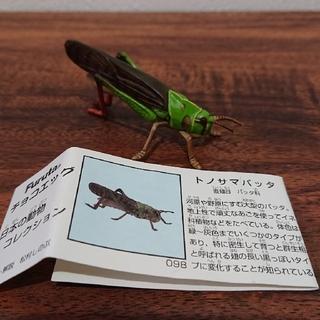 チョコエッグ 日本の動物コレクション