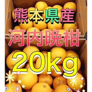 熊本県産河内晩柑20kg(フルーツ)