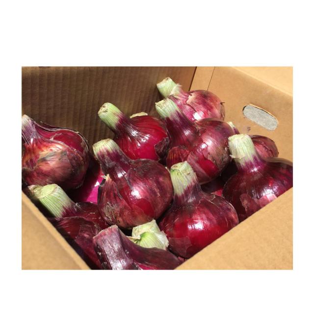 淡路島 赤玉ねぎ 秀品 S〜L 5㌔ ☆天然アミノ酸肥料 食品/飲料/酒の食品(野菜)の商品写真