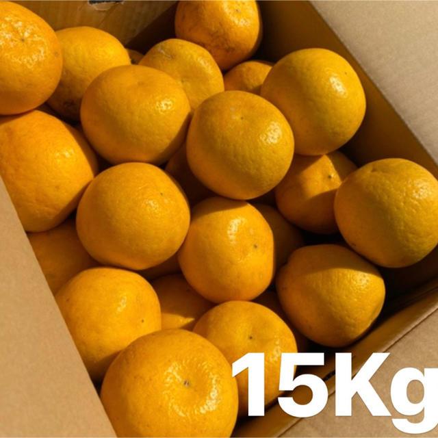 ミカン みかん 宇和ゴールド15Kg   美生柑 河内晩柑 愛媛 食品/飲料/酒の食品(フルーツ)の商品写真