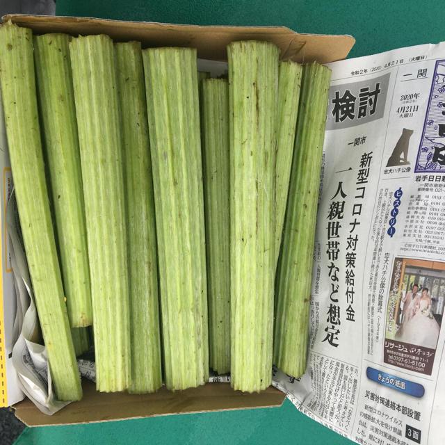 アキタフキ コンパクト便 満タン 食品/飲料/酒の食品(野菜)の商品写真