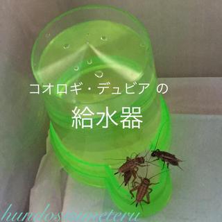 コオロギ・デュビア の給水器 給水タンク 水入れ 両生類爬虫類大型魚の生き餌用品(爬虫類/両生類用品)