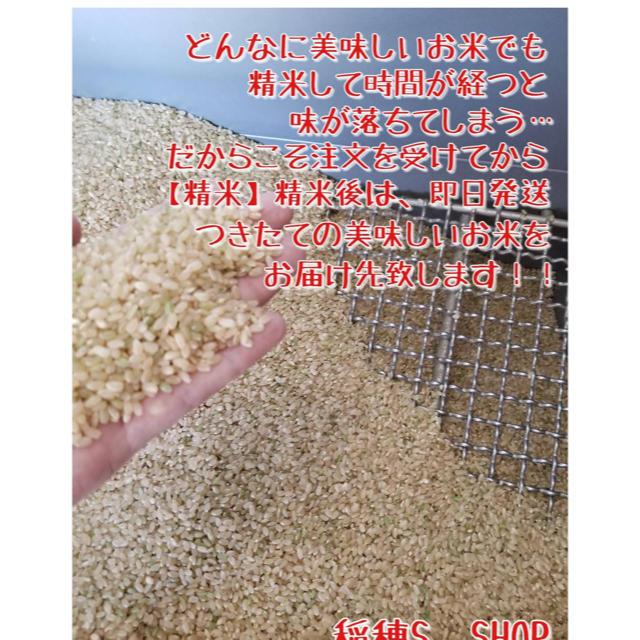 【即日発送】佐賀県産 夢しずく 白米20kg 特A 取得米 食品/飲料/酒の食品(米/穀物)の商品写真