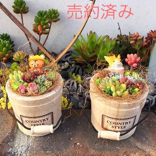 ★多肉植物 寄せ植え〜とっても可愛くてお得な5点セット〜★(その他)