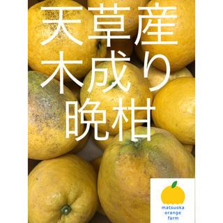 晩柑 家庭用 12.5kg(フルーツ)