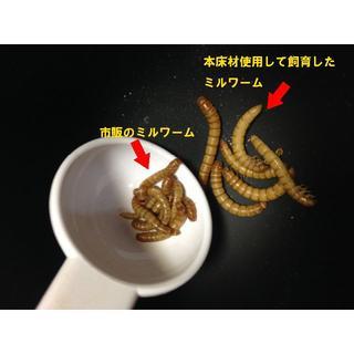 【ミルワームフード】消臭成分&乳酸菌配合 ミルワーム用 床材 500g (爬虫類/両生類用品)