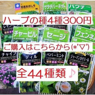 ㉔全44種類♪ ハーブの種 お好きな物 4種類 セット(その他)