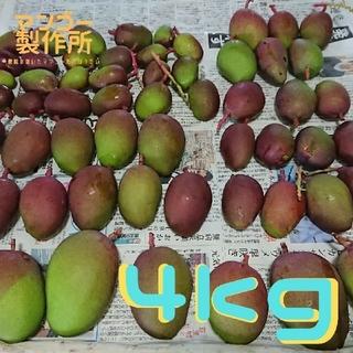 4番 4kg  グリーン マンゴー 摘果(フルーツ)