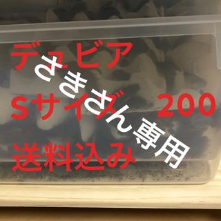 デュビア Sサイズ 200 送料込み コンパクトBOX配送(爬虫類/両生類用品)