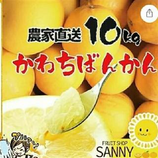 愛媛県産 わけあり和製グレープフルーツかわちばん10kg追加賜ります(フルーツ)