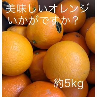 Sankistネーブルオレンジ 約5kg 大玉(フルーツ)
