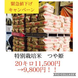 緊急値下げセール!光り輝く大粒米✳︎つや姫20キロ(米/穀物)