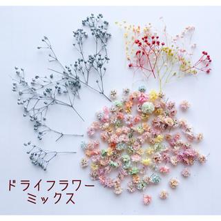 かすみ草 ドライフラワー 花材 ミックス(ドライフラワー)
