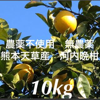 農薬不使用 無農薬 柑橘 みかん 河内晩柑 かわちばんかん10kg  熊本天草産(フルーツ)