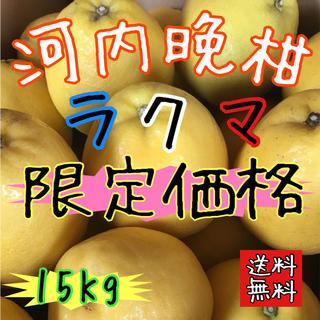 【愛媛えひめ産】フルーツ くだもの 果実 かんきつ 柑橘 みかん 《河内晩柑》(フルーツ)