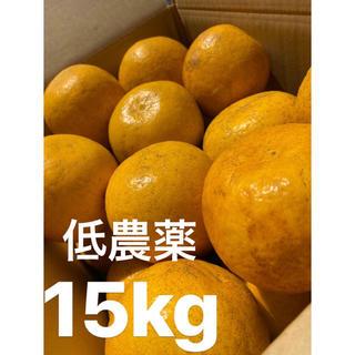 愛媛 低農薬 宇和ゴールド15Kg   美生柑 河内晩柑(フルーツ)