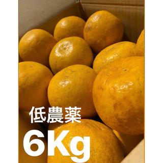 ミカン みかん 低農薬 愛媛 宇和ゴールド6Kg   美生柑 河内晩柑(フルーツ)