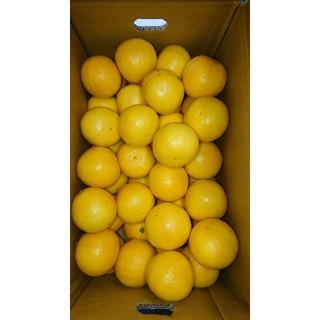 温室 小夏 Sサイズ 5kg 高知県産 ご家庭用(フルーツ)
