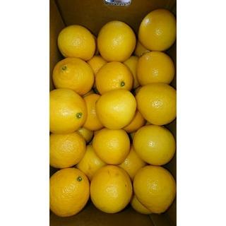 温室 小夏 Mサイズ 5kg 高知県産 ご家庭用(フルーツ)
