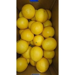 温室 小夏 Lサイズ 5kg 高知県産 ご家庭用(フルーツ)
