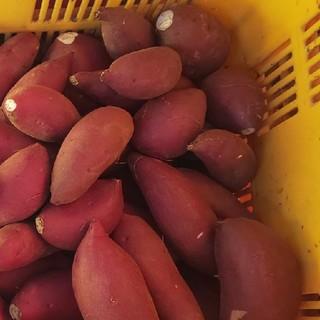 【yui様専用】紅はるか シルクスイート さつまいも(野菜)