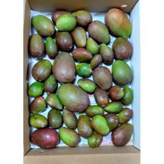 サラダや漬物ピクルスおつまみにも!沖縄産 青マンゴー2kg♪(フルーツ)