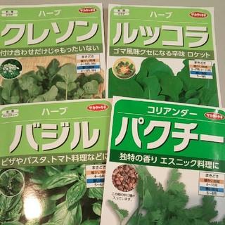 種セット【バジル、ルッコラ、クレソン、パクチー】 サカタのタネ(野菜)