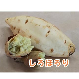 【coringo様専用】しろほろり さつまいも(野菜)
