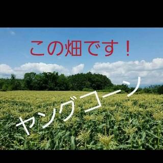 🌽山梨県産🌽ヤングコーン🌽朝どり発送🌽(野菜)