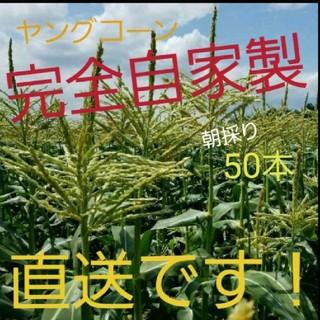 🌽ご好評頂いてます🌽山梨県産ヤングコーン🌽(野菜)