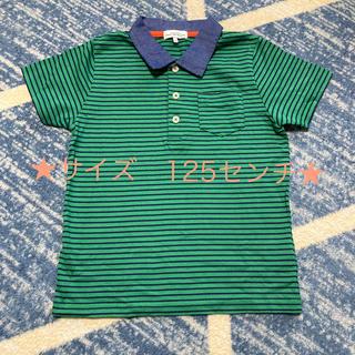 GREEN LABEL RELAXING 襟付きTシャツ
