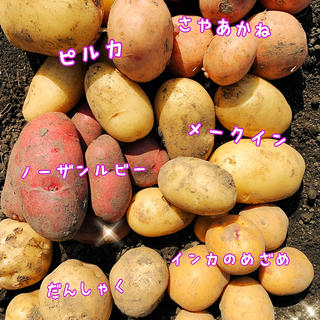 新じゃがいも 5品種詰め合わせ(野菜)
