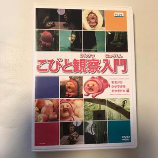 こびと観察入門 モモジリ クサマダラ モクモドキ編  こびとづかん  DVD
