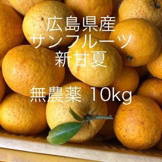 広島県産 サンフルーツ 新甘夏 10kgお入れして発送致します😋(フルーツ)