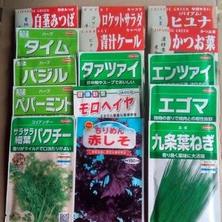 🥬家庭菜園 畑向き 春蒔き野菜の種 5種類セット 小分け(野菜)